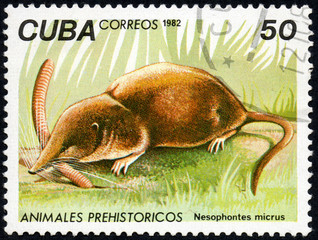 UKRAINE - CIRCA 2017: A stamp printed in Cuba, shows a extinct animal Nesophontes micrus, the series Prehistoric animals, circa 1982