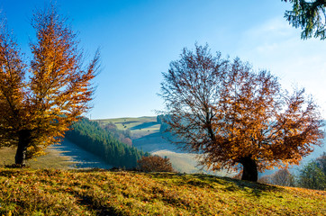 Autumn landscape, a tree with orange leaves in the foreground, the frost on green grass autumn mountain in fog in the background.