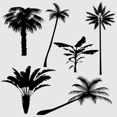 Tropical palm tree vector silhouettes isolated on white background