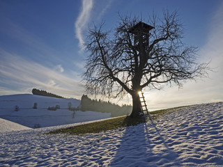 Tree with tree house in the backlight