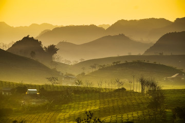 Beauty fresh green tea in sunrise, Moc Chau highland of Vietnam. Beauty highlands in sunrise landscapes.