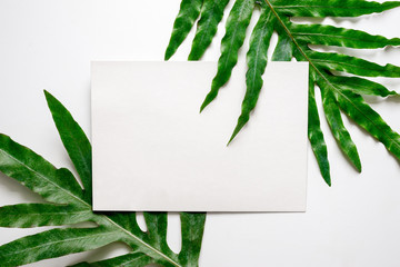 Tropical background with a space for a text