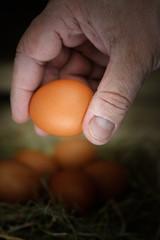 Fresh eggs in a hand.
