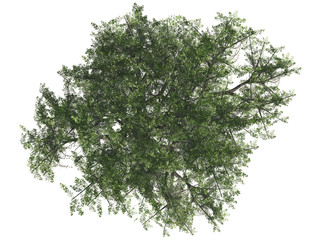 Green tree isolated on white background, top view, 3 d render