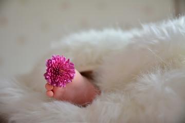 Çiçekler içinde bebek uykusu