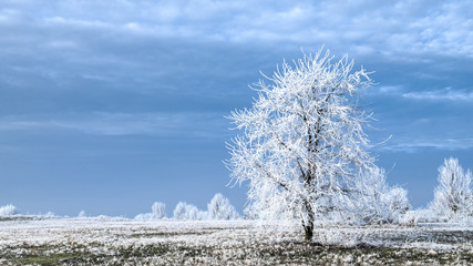 Winter tree covered with frost against blue sly with clouds