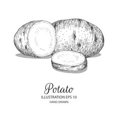 Potato hand drawn illustration by ink and pen sketch. Isolated vector elements design for fruit and vegetable products and health care goods.