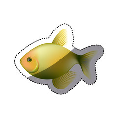 colorful picture fish aquatic animal vector illustration