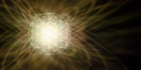 Illuminated Flower of Life Sepia Background - glowing soft focus circular flower of life symbol pattern on left side of a wide dark brown background with copy space on right