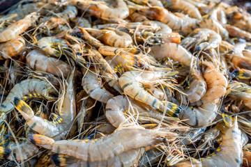 Tiger prawns at Asian fishmarket