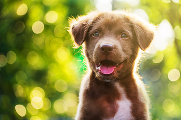 brown puppy with bokeh background Wall mural