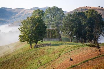 sheep farm in the mountains on foggy spring morning - Apuseni mountains, Transylvania