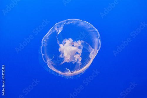 Wall mural jelly fish in the blue sea