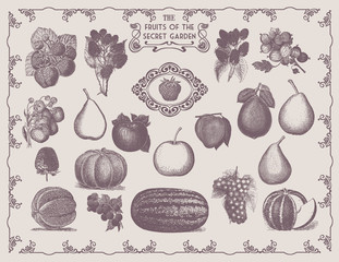 Collection of Vintage Drawn Fruits and Food from the Garden Vector Elements. Perfect for Web Design, Shirts, Scrapbooking, Logos, Badges, Poster and Flyer. Ressource for Illustration Work.
