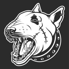 Bull terrier with skar