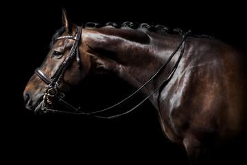 Fotobehang Paarden braunes Pferd mit Trense