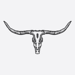 Longhorn Skull vector
