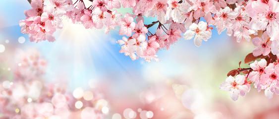 Natur Szenerie im Frühling: Kirschblüte, Bokeh Hintergrund und Sonne