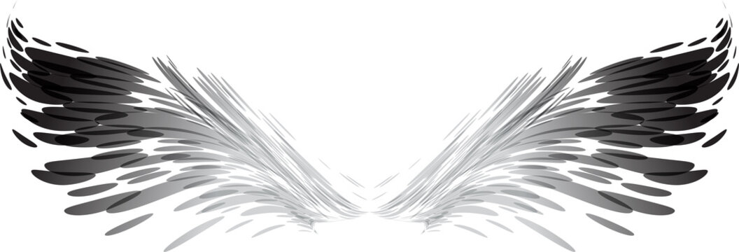 Abstract black and white wings