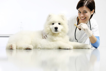 smiling Veterinarian with dog and food, on table in vet clinic, animal diet concept