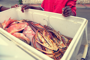 Freshly Caught Tropical Fish and lobsters in a bucket offered by a seller. Dominican Republic
