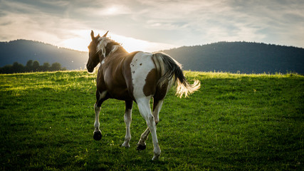 View of a horse in the Slovakian region Orava