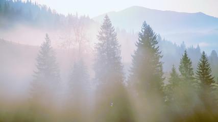 Morning mist in mountain.