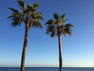 Palm trees in the blue sunny sky background