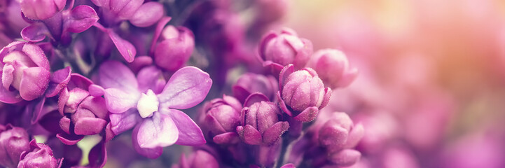 Foto op Canvas Bloemen Lilac flowers background