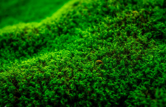 Vivid Green Moss