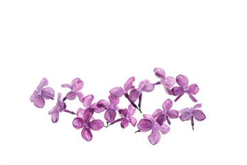 Foto op Aluminium Lilac lilac flowers isolated