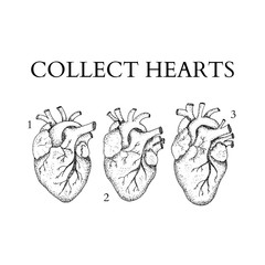 Dotwork Collect Human Hearts