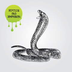 snake hand drawn sketch isolated on white background and green blob with drops. Reptiles and amphibian sketch elements vector illustration.