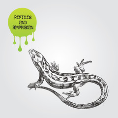 Lizard hand drawn sketch isolated on white background and green blob with drops. Reptiles and amphibian sketch elements vector illustration.