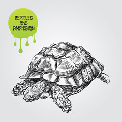 Turtle hand drawn sketch isolated on white background and green blob with drops. Reptiles and amphibian sketch elements vector illustration.
