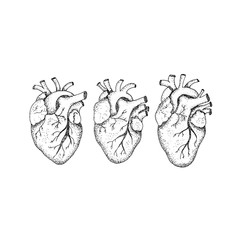 Dotwork Three Human Hearts