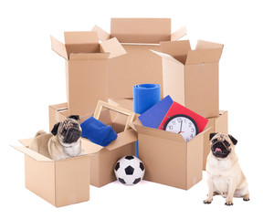 moving day concept - brown cardboard boxes and dogs isolated on white