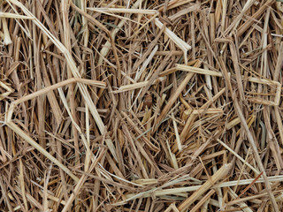 Texture of hay or straw, used as background, for feeding farm animals
