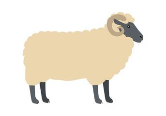 Ram with Wool Vector Flat Design Illustration