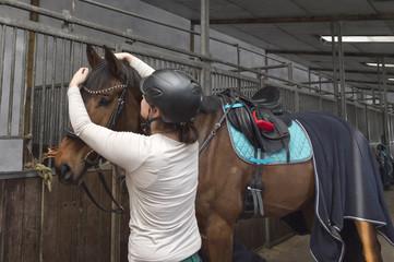 Pferd - Hannoveraner - wird in der Stallgasse gezügelt