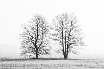 Czarno-biały zarys dwóch drzew