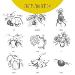 Exotic fruits vector botanical illustration sketch set