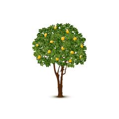 Vector orange tree on white background