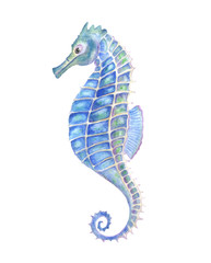 Watercolor seahorse, aquarelle illustration.