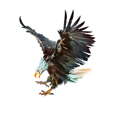 painted eagle attacking isolated on white background