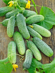 Harvest of cucumbers on old timber