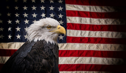Wall Mural - American Bald Eagle with Flag.
