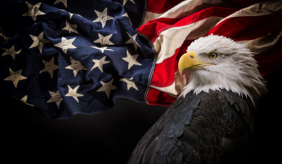 American Bald Eagle with Flag. Wall mural