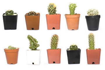 Close up of group cactus in pot on white background