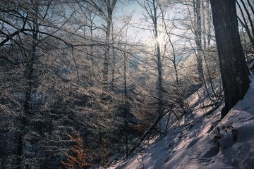 Winter Forest Scene with frozen Tree Branches